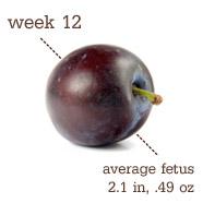 Week 12 Size
