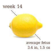 Week 14