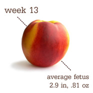 Week 13 Size