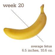 Week 20 Size