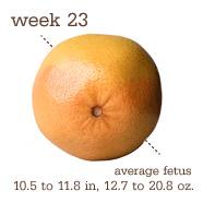 Week 23 Size